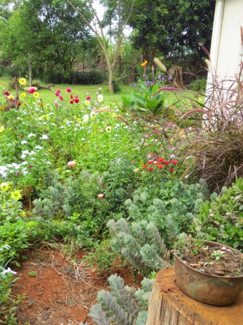 The drought notwithstanding, my garden fills my life with colour
